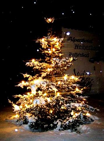 weihnachtsbaum.jpg